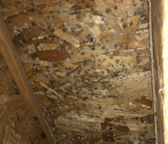 Mold Remediation What To Know About Mold in Your Home