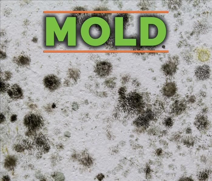 4 Facts You Should Know About Black Mold